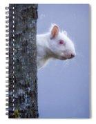 Albino Squirrel Spiral Notebook