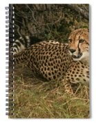 Alert Cheetah Spiral Notebook