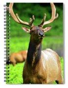Alert Spiral Notebook