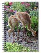 All Legs Sandhill Colts Spiral Notebook