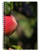 All Natural Peach Spiral Notebook