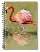 All Ruffled Up Spiral Notebook