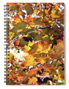 All The Leaves Are Red And Orange Fall Foliage With Sunshine Spiral Notebook