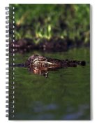 Alligator Eyes Spiral Notebook