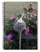 Allium Blossom With Cap Spiral Notebook