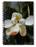 Alluring Moment Spiral Notebook