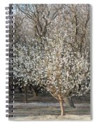 Almond Orchard 1 Spiral Notebook