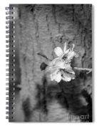 Almond Orchard 2 Spiral Notebook