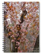 Almond Tree Flowers 05 Spiral Notebook