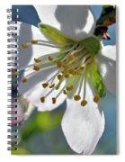 Almonds In Lachish 1 Spiral Notebook