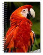 Aloof In Red Spiral Notebook