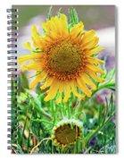 Alpine Sunflower In Summer Spiral Notebook