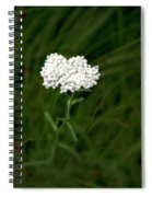 Alpine Yarrow Wildflower 1 Spiral Notebook