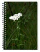 Alpine Yarrow Wildflower 2 Spiral Notebook