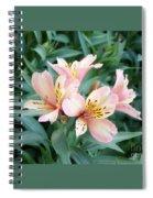 Astroemeria  Spiral Notebook