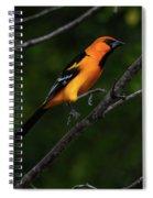 Altamira Oriole - Limb Hopping Spiral Notebook