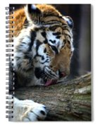 Always A Cat Spiral Notebook