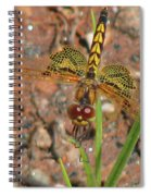 Amanda's Pennant Dragonfly Female Spiral Notebook