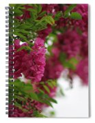 Amaranth Pink Flowering Locust Tree In Spring Rain Spiral Notebook