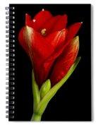 Amaryllis 12-23-2010 Spiral Notebook
