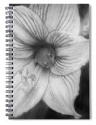 Amaryllis And Tree Frog Painted Bw Spiral Notebook