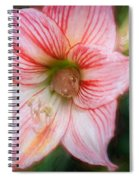 Amaryllis And Tree Frog Painted  Spiral Notebook