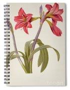 Amaryllis Brasiliensis Spiral Notebook
