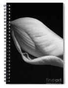 Amaryllis Bw Spiral Notebook