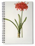Amaryllis Curvifolia Spiral Notebook