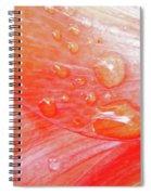 Amaryllis Dew Drops Spiral Notebook
