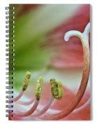 Amaryllis Flower Spiral Notebook