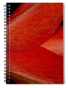 Amaryllis Flower Sideways Spiral Notebook