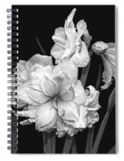 Amaryllis In Black And White Spiral Notebook