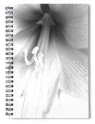 Amaryllis In White Spiral Notebook