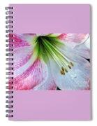 Amaryllis - Lily Spiral Notebook
