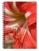 Amaryllis Macro Spiral Notebook