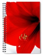 Amaryllis Square Spiral Notebook