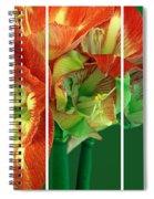 Amaryllis Triptych Spiral Notebook