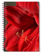Amaryllis6689 Spiral Notebook