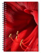 Amaryllis6709 Spiral Notebook