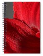 Amaryllisleaves6698 Spiral Notebook