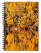 Amazing Autumn Spiral Notebook