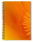 Amazing Colors Spiral Notebook