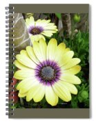 Amazing Daisy  Spiral Notebook