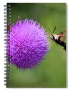 Amazing Insects - Hummingbird Moth Spiral Notebook
