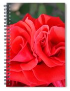 Amazing Rose Spiral Notebook