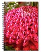 Amazing Waratah Flower Spiral Notebook