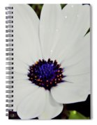 Amazing White African Daisy Spiral Notebook