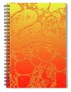 Amber Crackle Spiral Notebook