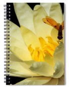 Amber Dragonfly Dancer Too Spiral Notebook